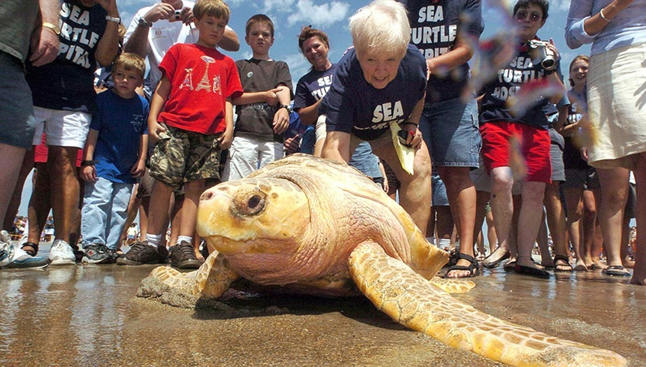 SeaTurtleRelease_AndyPettigrew.jpg