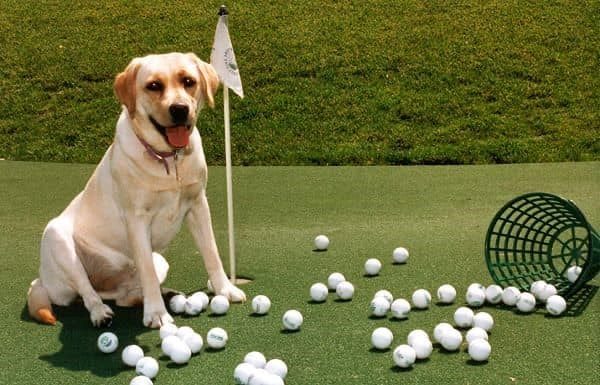 2020 FORE Our Furry Friends Golf Tournament