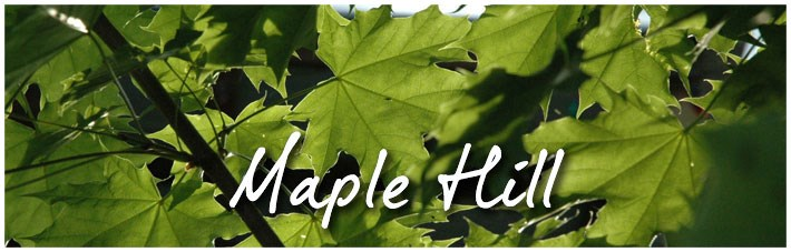 maple-hill