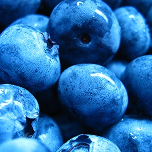 Newberry's Blueberries