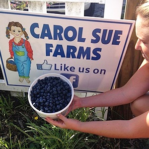 Carol Sue Blueberry Farm